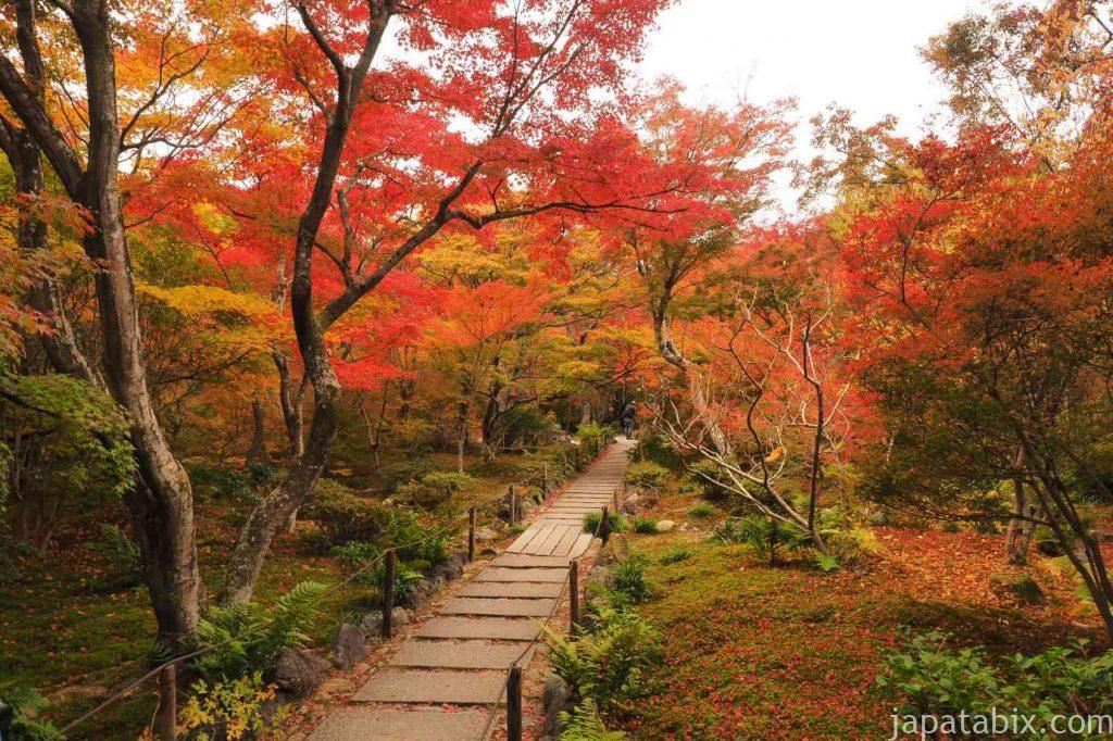 京都 嵯峨 宝筐院 石畳の参道の紅葉