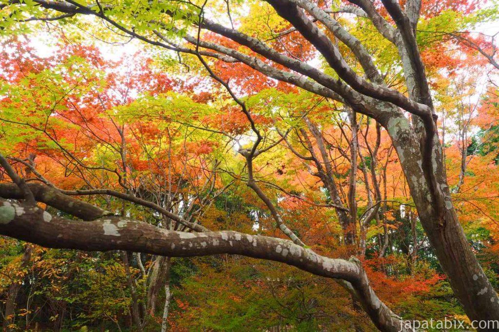 京都 嵯峨 宝筐院 境内の紅葉
