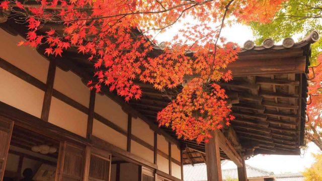京都 嵯峨 宝筐院 本堂の紅葉
