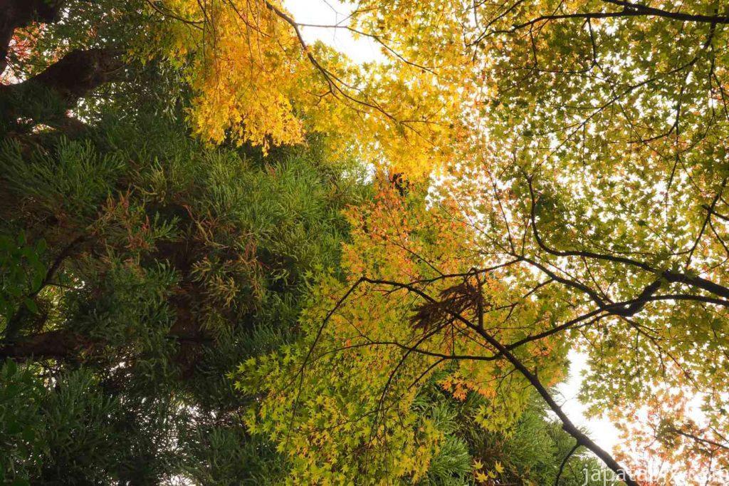 京都 嵯峨 宝筐院 枯山水庭園の紅葉