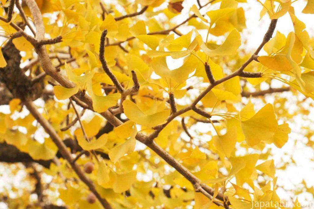 京都 嵯峨 清涼寺 嵯峨釈迦堂 境内の紅葉