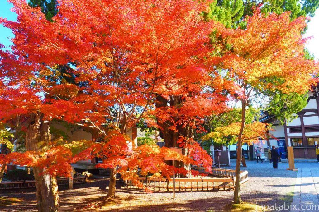 京都 光明寺 書院と紅葉