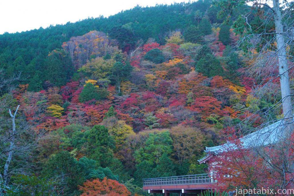 京都 西山 善峯寺 西山の紅葉