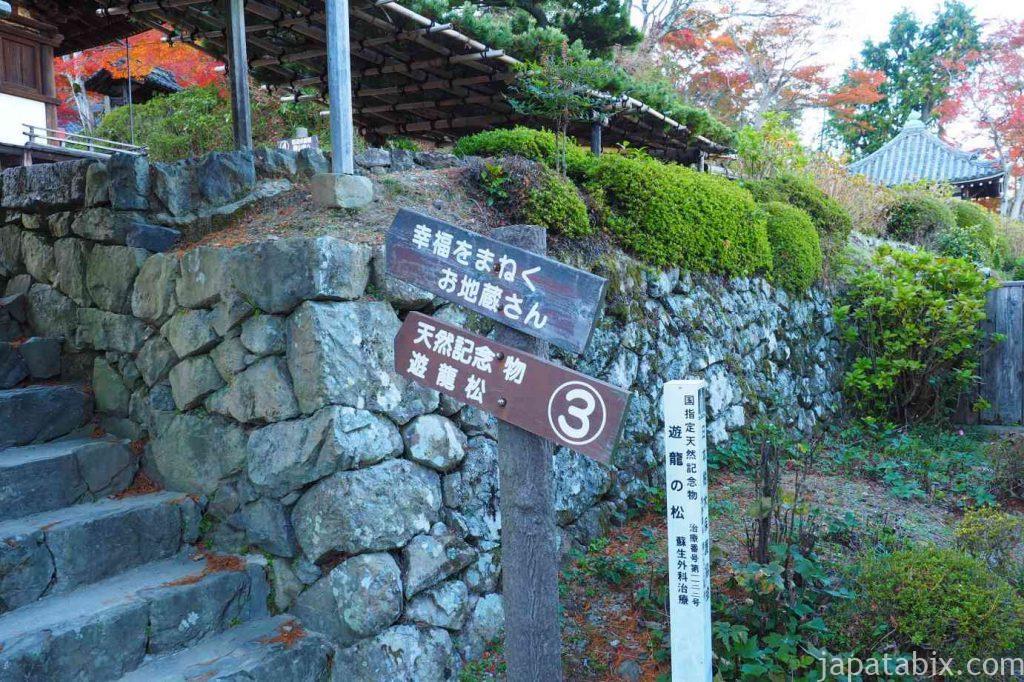 京都 西山 善峯寺 遊龍の松