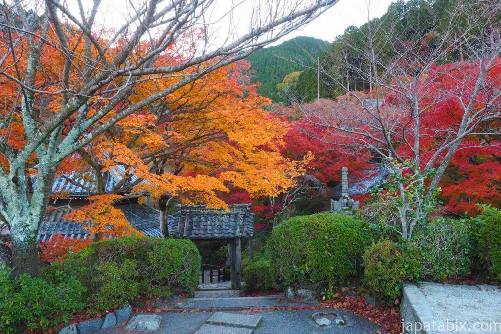 京都 西山 善峯寺 釈迦堂と紅葉
