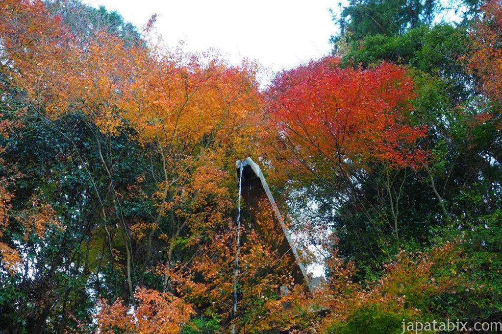 京都 西山 善峯寺 青蓮の滝の紅葉