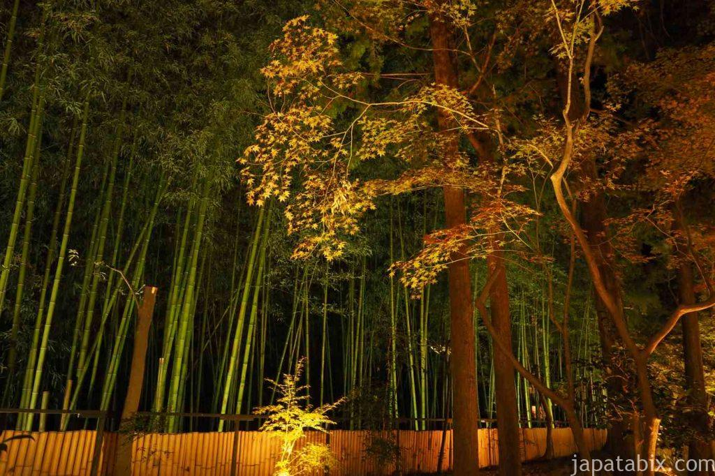 京都 嵯峨 鹿王院 夜間特別拝観 紅葉ライトアップと竹林