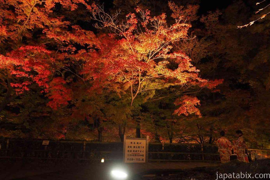 京都 北野天満宮 紅葉 大欅