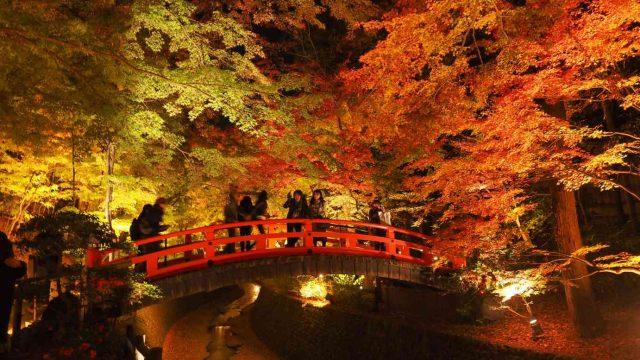 京都 北野天満宮 もみじ苑 紅葉 ライトアップ