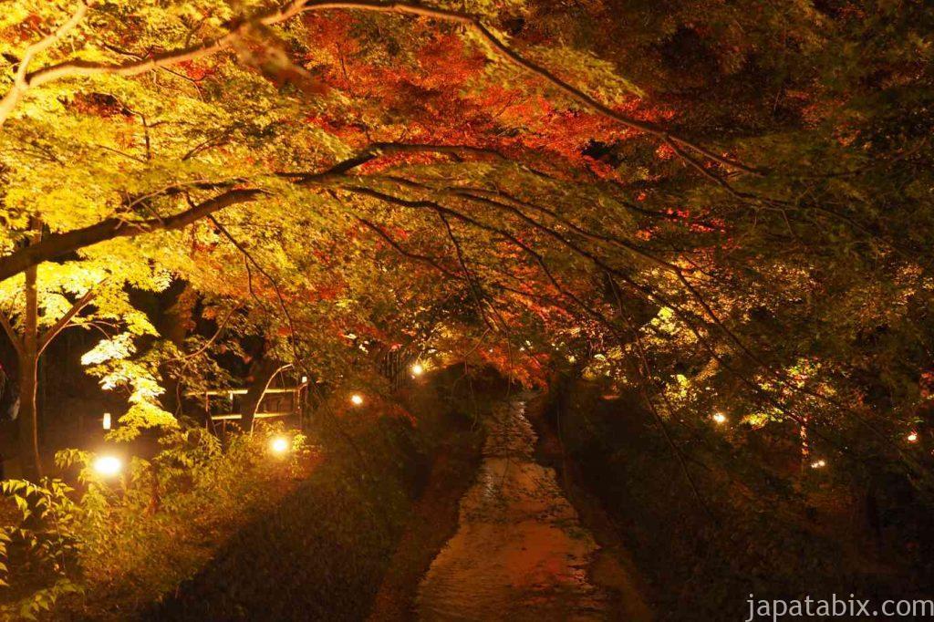 京都 北野天満宮 もみじ苑 紅葉 ライトアップ 紙屋川にかかる紅葉のアーチ
