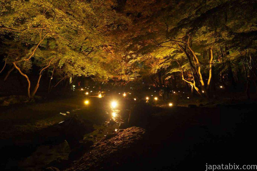 京都 醍醐寺 紅葉ライトアップ 無量寿苑