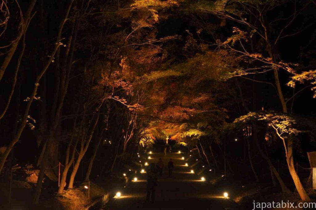京都 醍醐寺 紅葉ライトアップ 伽藍