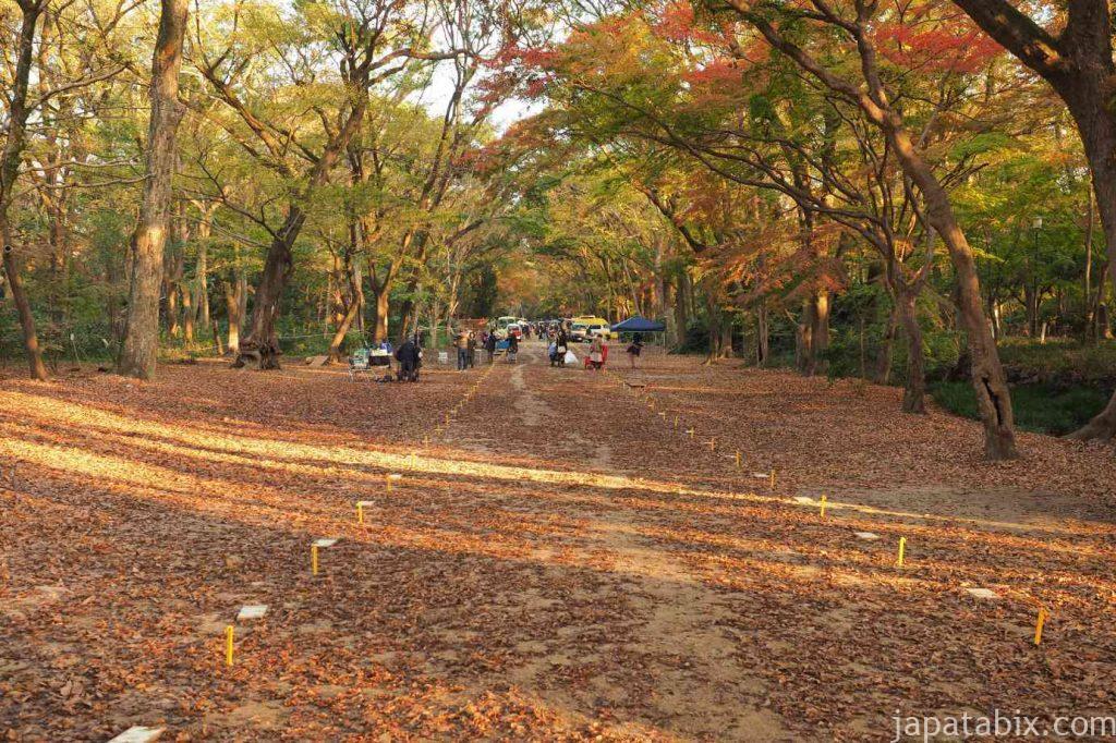 京都 下鴨神社 糺の森 紅葉