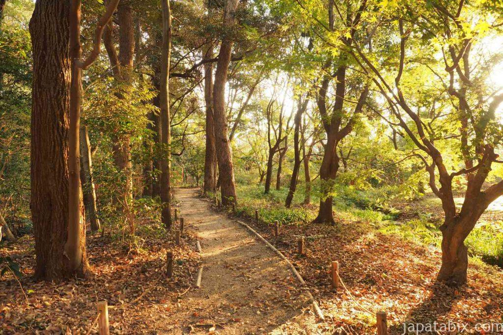 京都 下鴨神社 糺の森