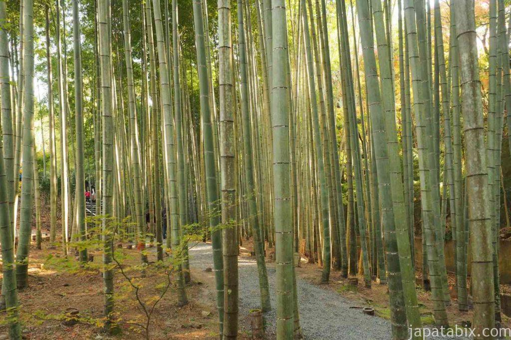 京都 圓光寺 応挙竹林