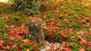 京都 圓光寺 十牛之庭の紅葉