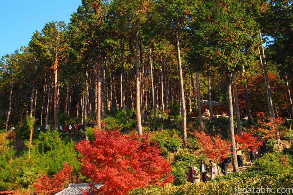 京都 圓光寺 高台の紅葉