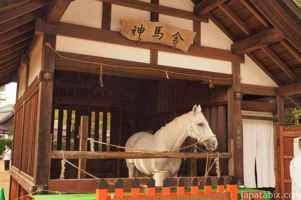 京都 上賀茂神社 神馬