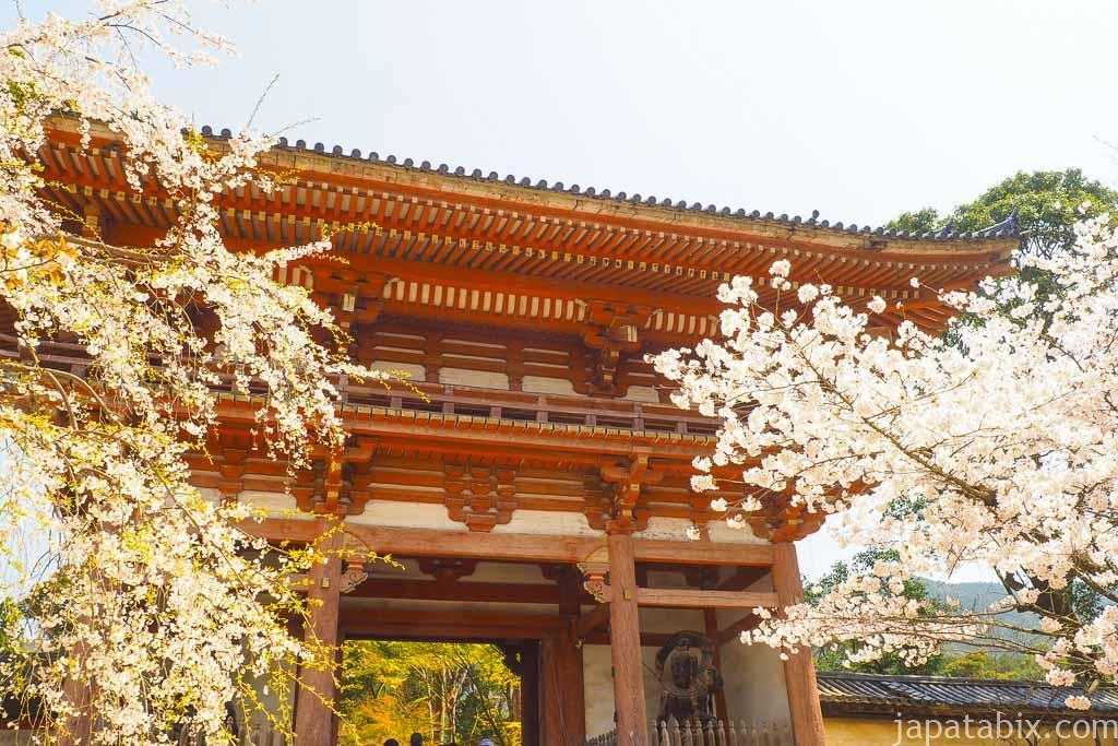 京都 醍醐寺 仁王門の桜