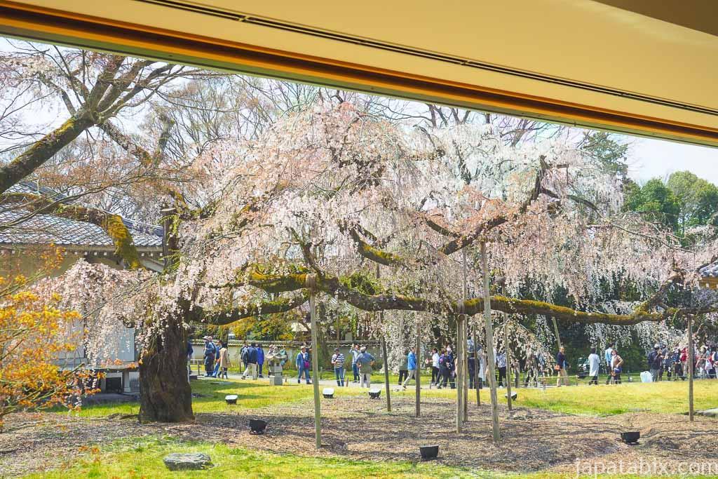 京都 醍醐寺 霊宝館の桜