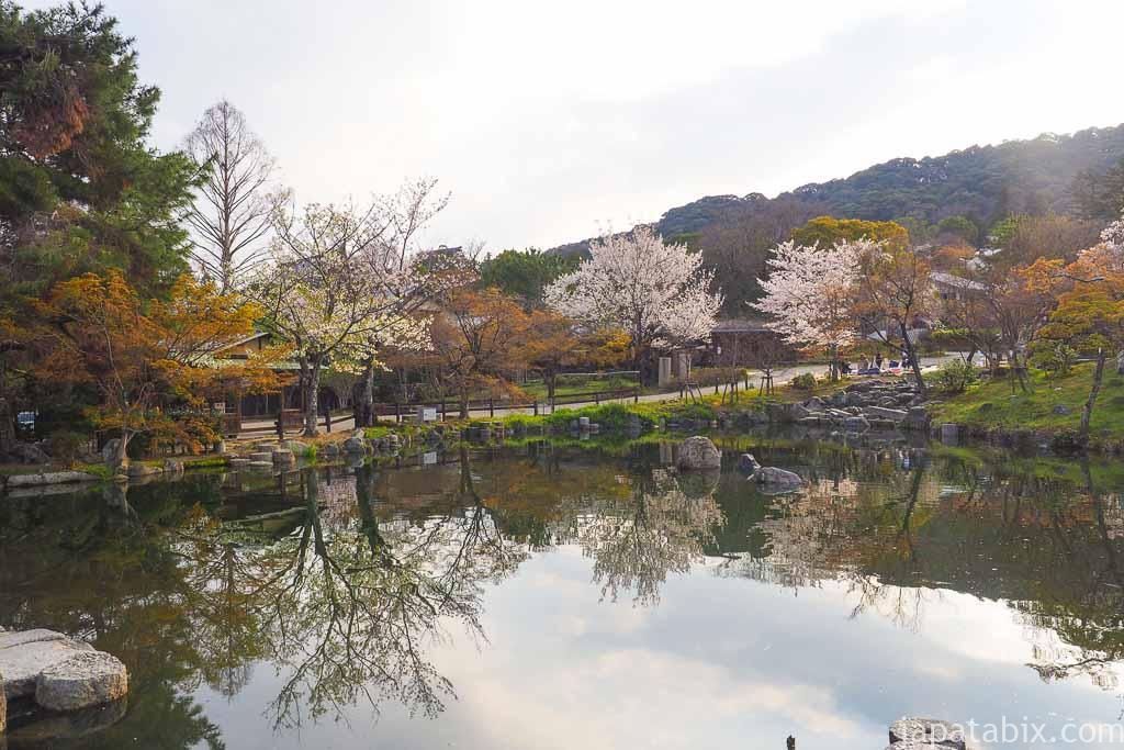 京都 早朝の円山公園 ひょうたん池