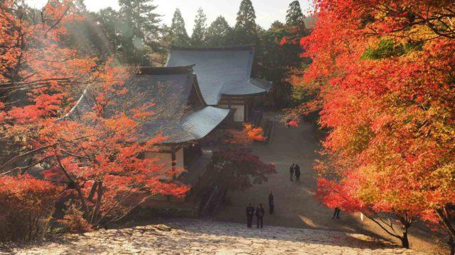 京都高雄 神護寺 紅葉