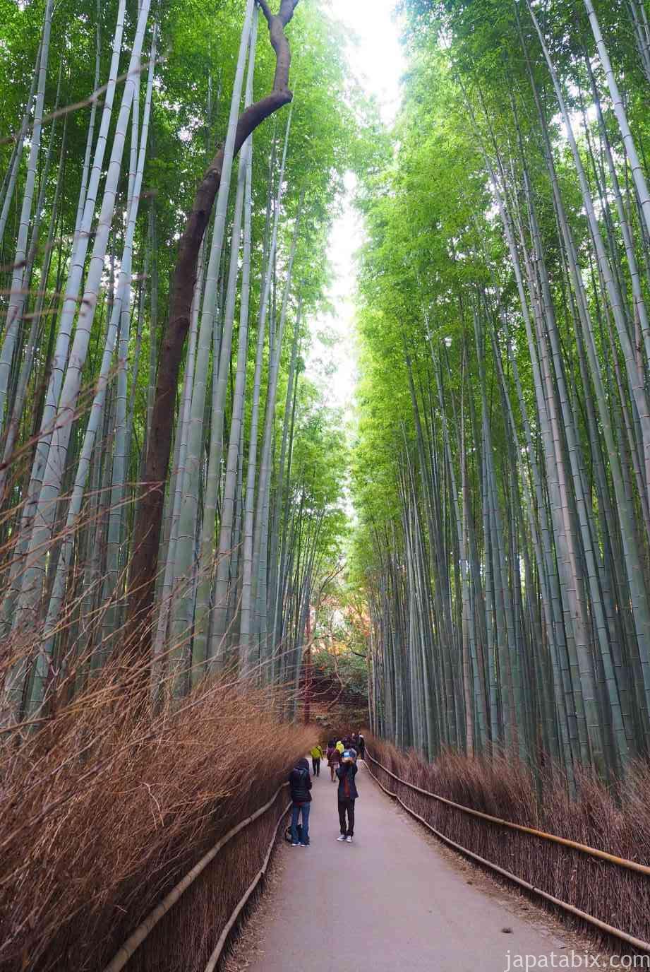京都 嵐山 竹林の小径