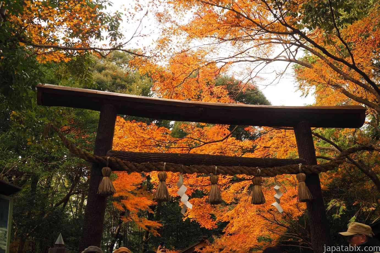 京都 嵐山 紅葉 野宮神社