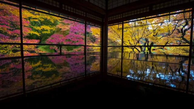 京都 瑠璃光院の紅葉