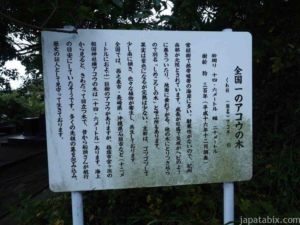 指宿報国神社のアコウ(信楽寺のアコウ)