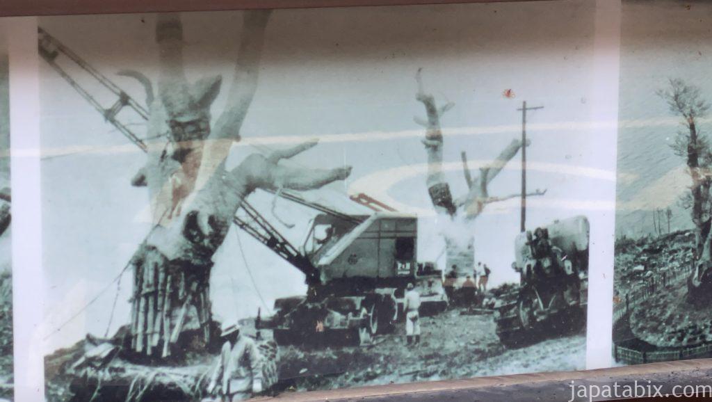 岐阜 荘川桜 ダム建設時の移植の様子