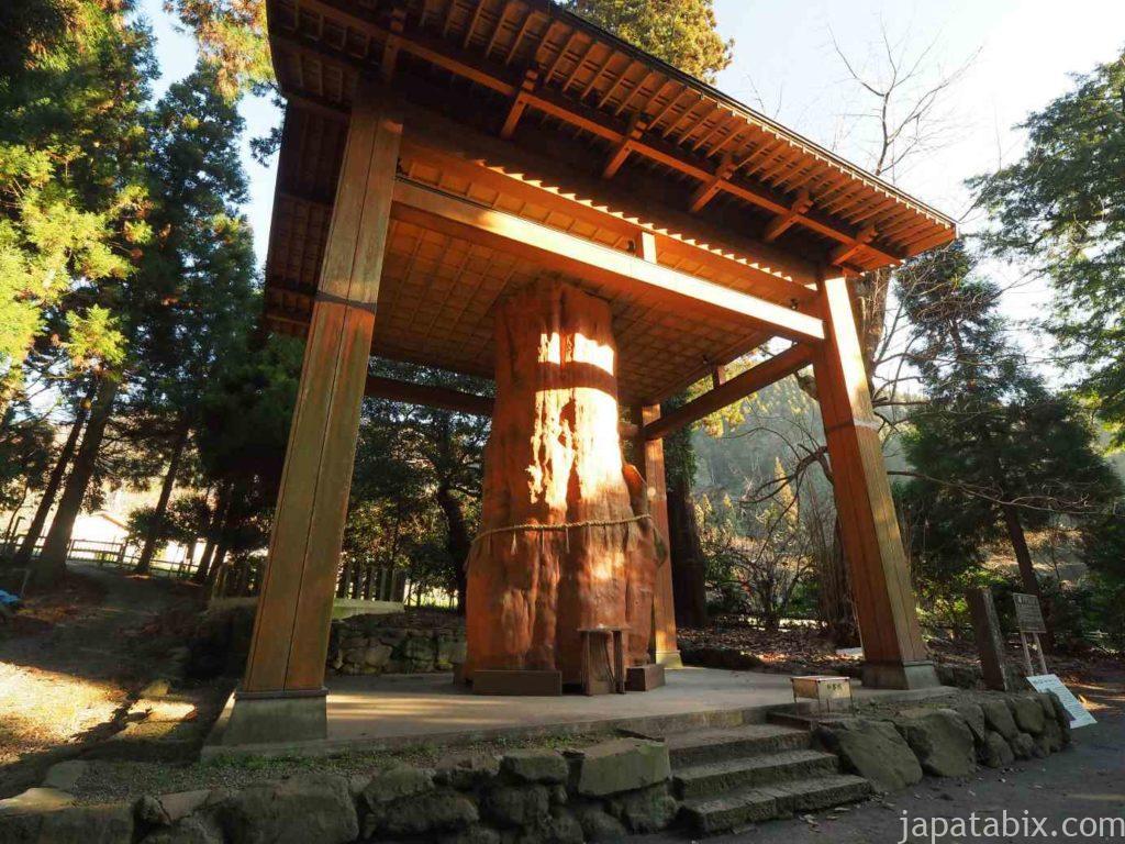 熊本 国造神社 手野のスギ
