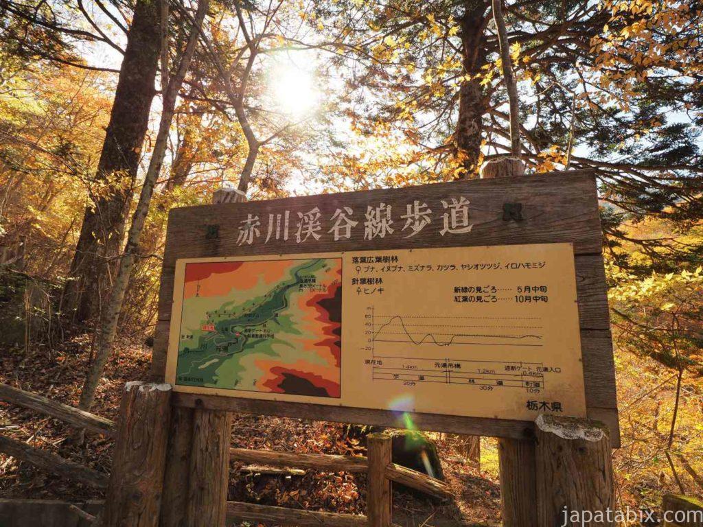 赤川渓谷線歩道の紅葉