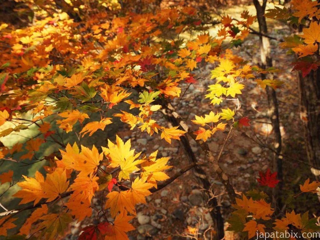 上三依水生植物園の紅葉