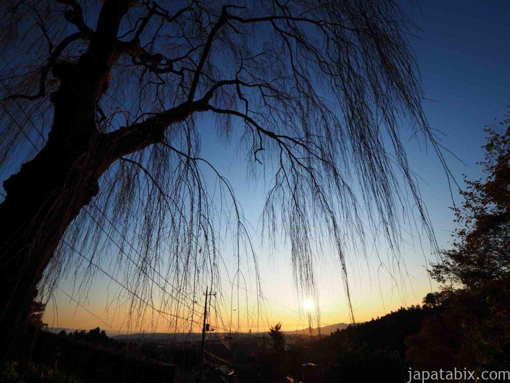 妙義神社の枝垂れ桜