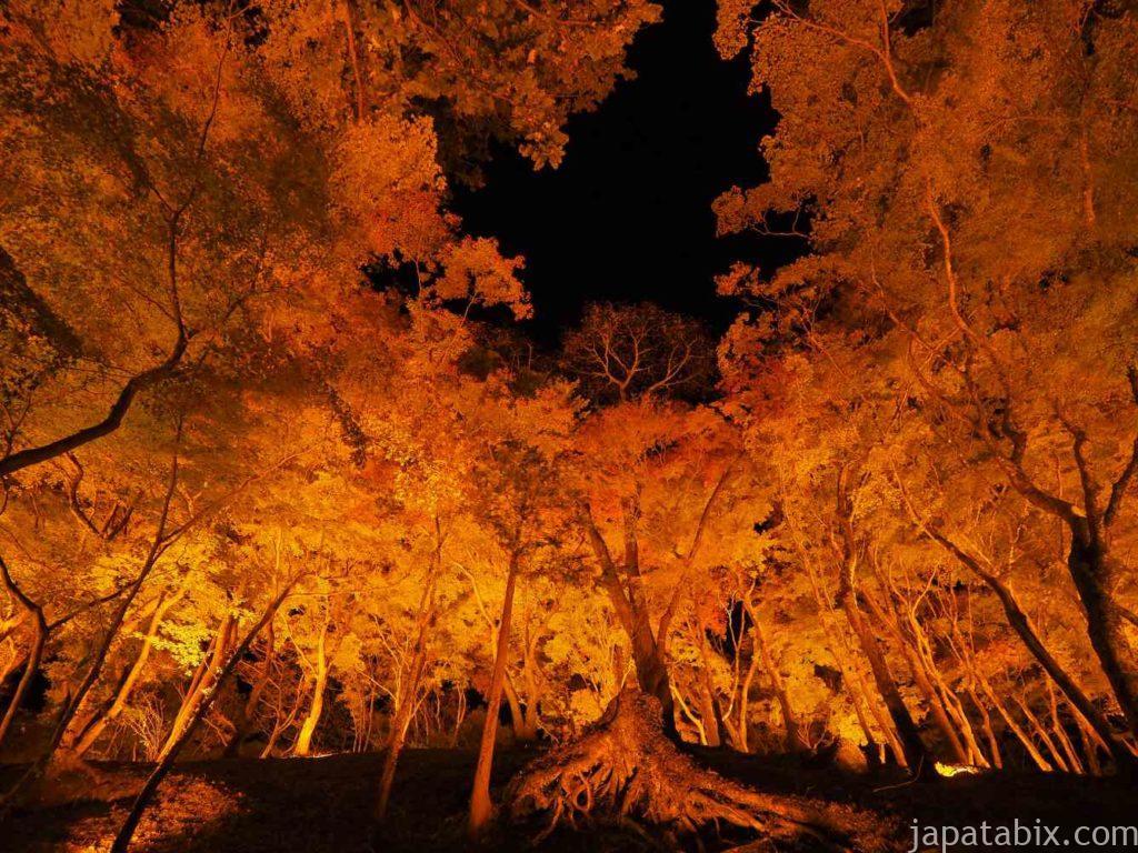 香嵐渓 紅葉 ライトアップ もみじのトンネル