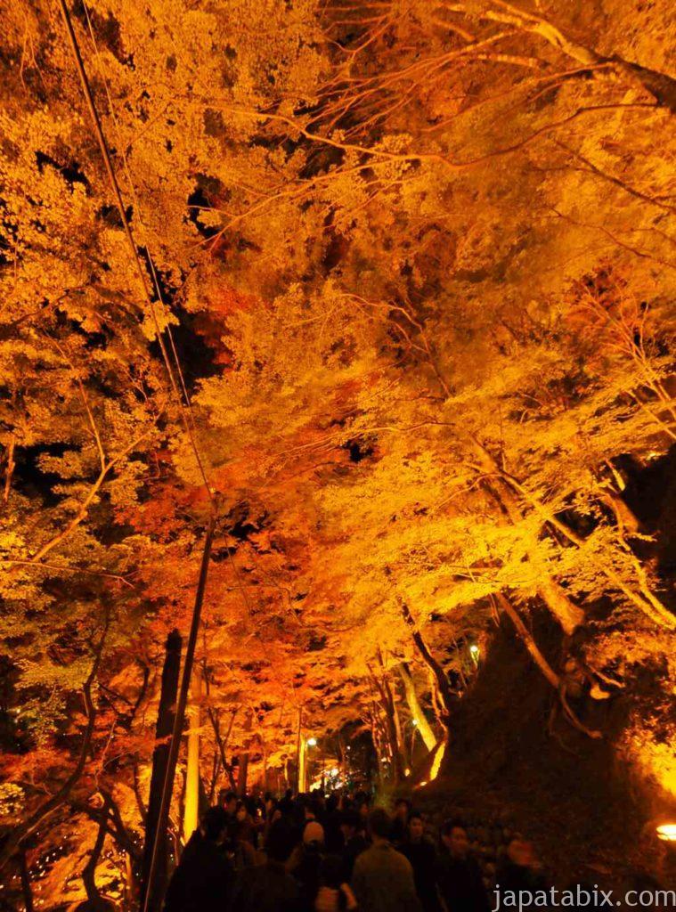 香嵐渓 紅葉ライトアップ もみじのトンネル