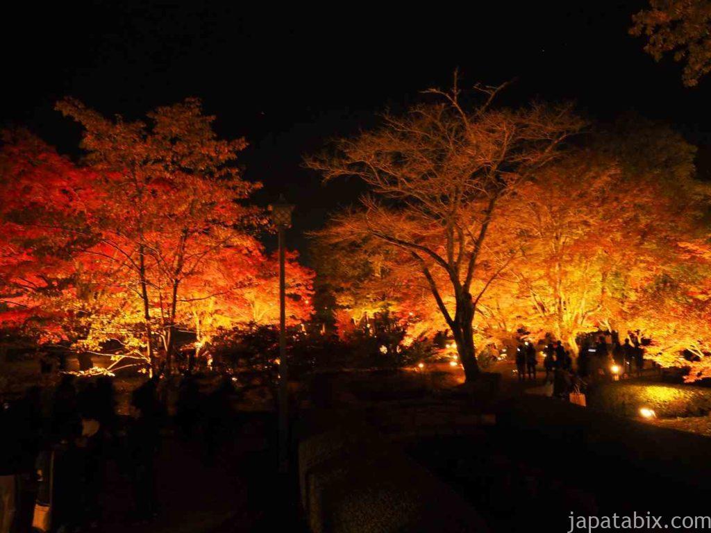 曾木公園 紅葉ライトアップ