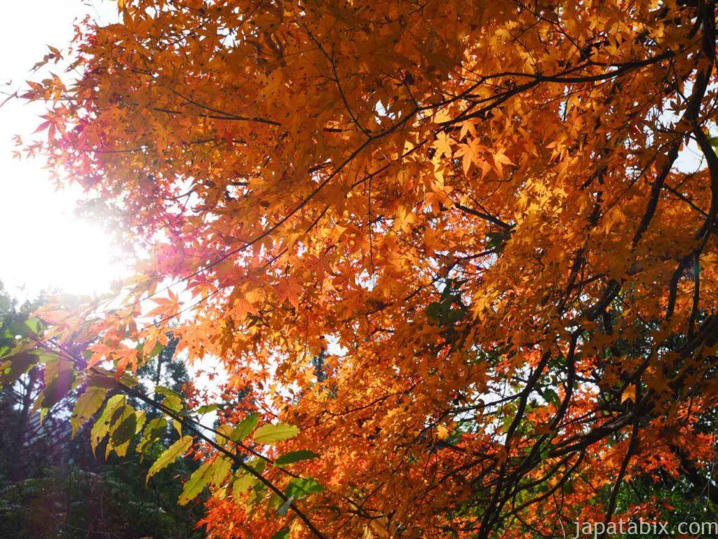夕森公園の紅葉