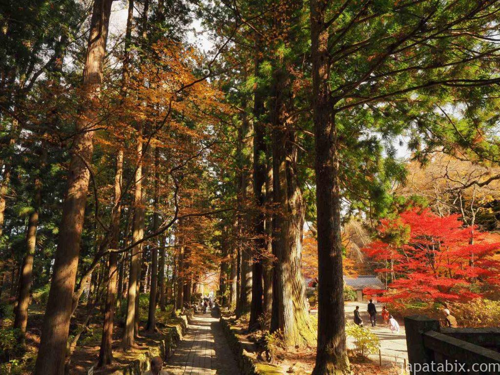 光前寺 参道の杉並木の紅葉