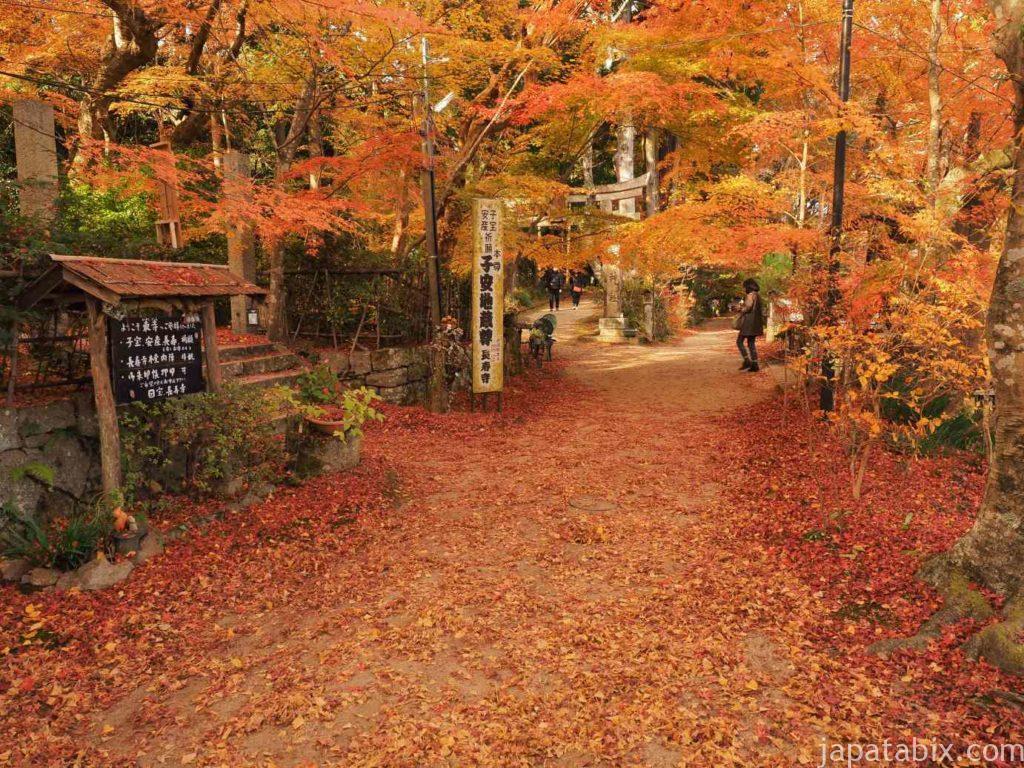 滋賀 湖南三山 長寿寺の紅葉