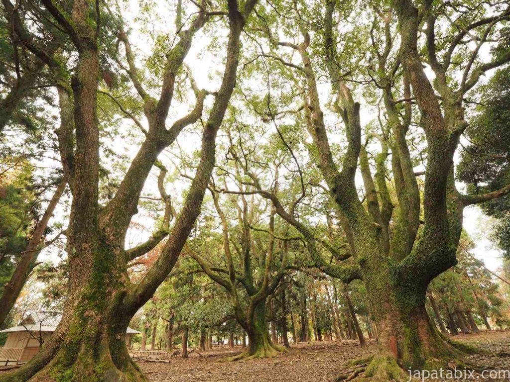 奈良公園の樹木