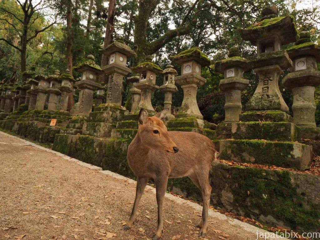 奈良公園の鹿と春日灯篭