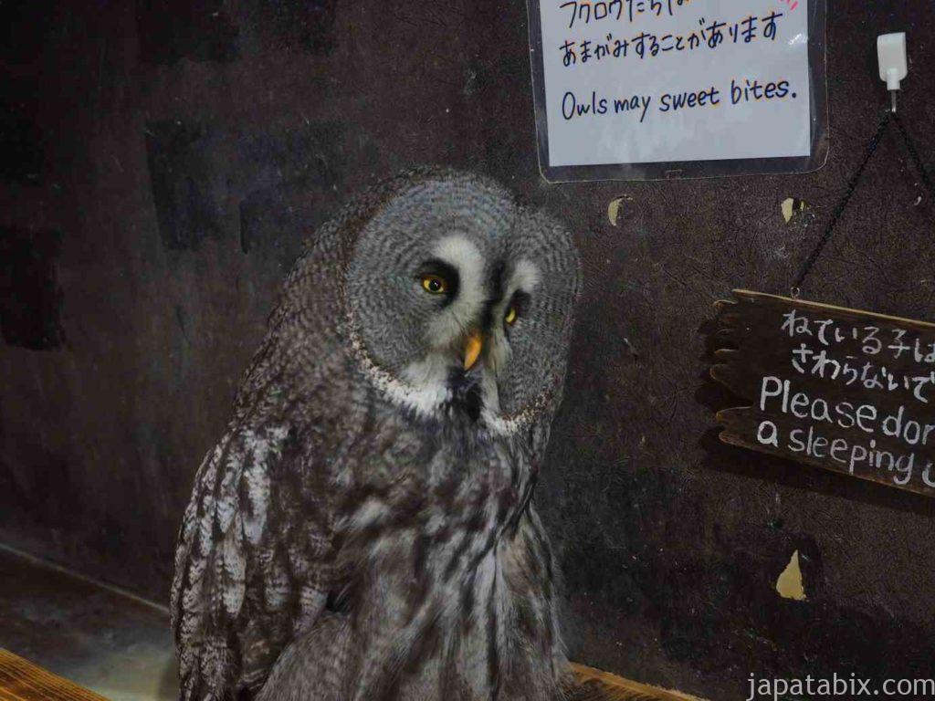 奈良 ならまち保護どうぶつ園 カラフトフクロウ