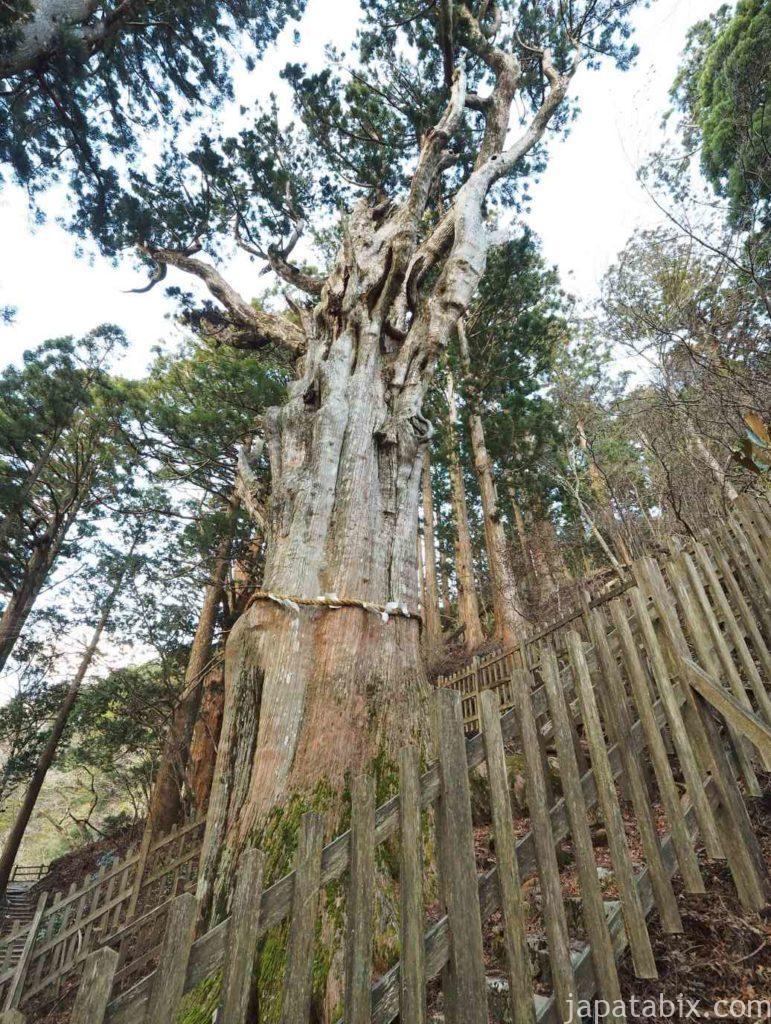 奈良 玉置神社 巨木 神代杉