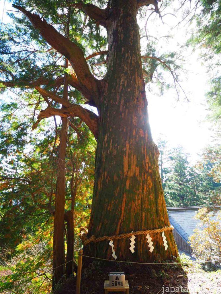 奈良 玉置神社 巨木 大杉