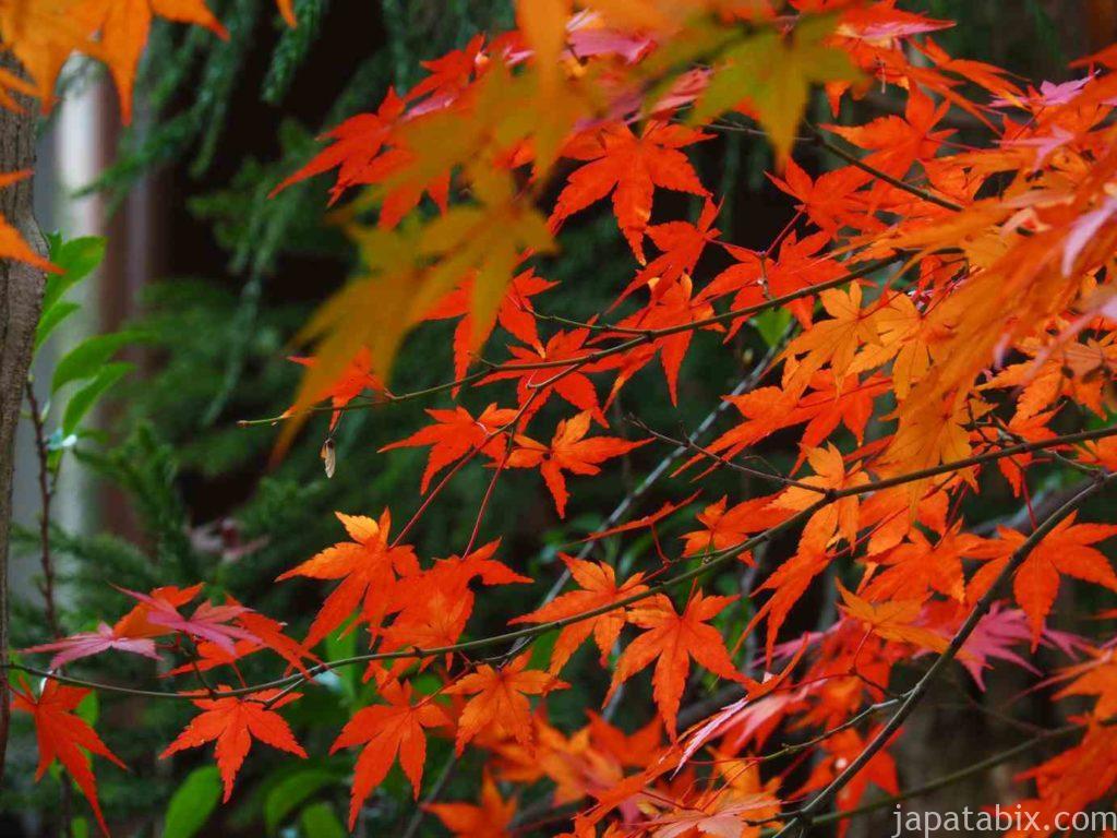 島根 足立美術館の紅葉
