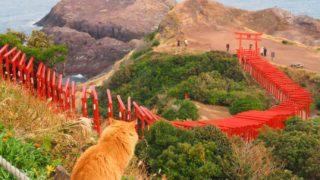 山口 元乃隅神社と猫