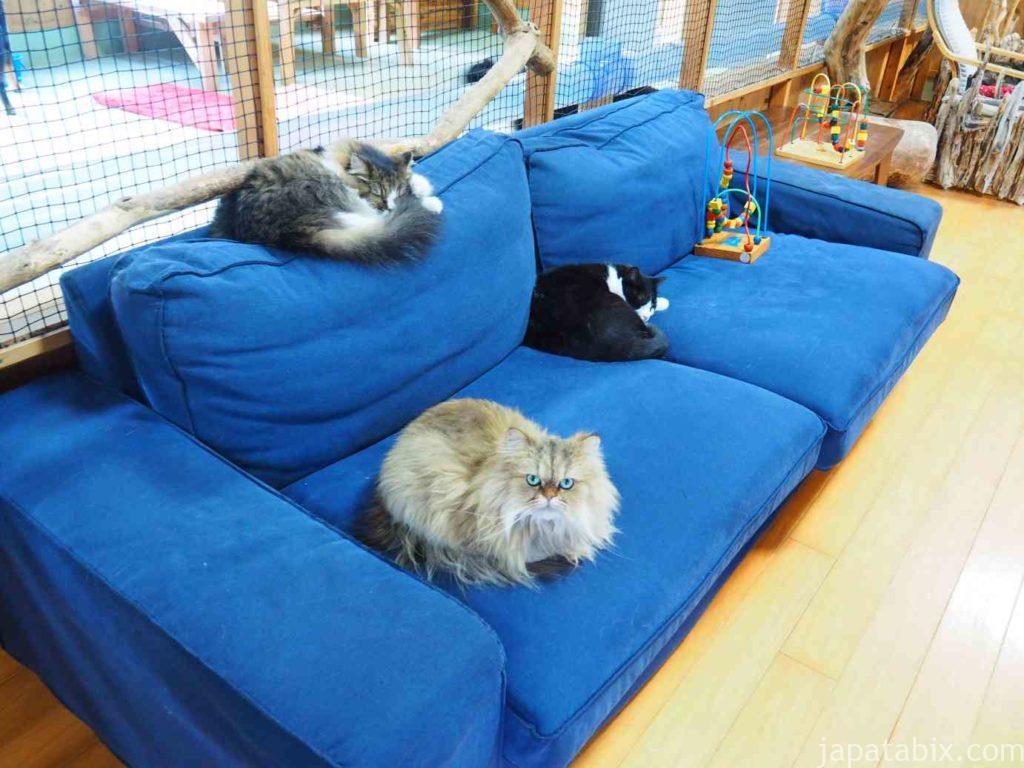 長崎バイオパーク PAWの猫ちゃんたち