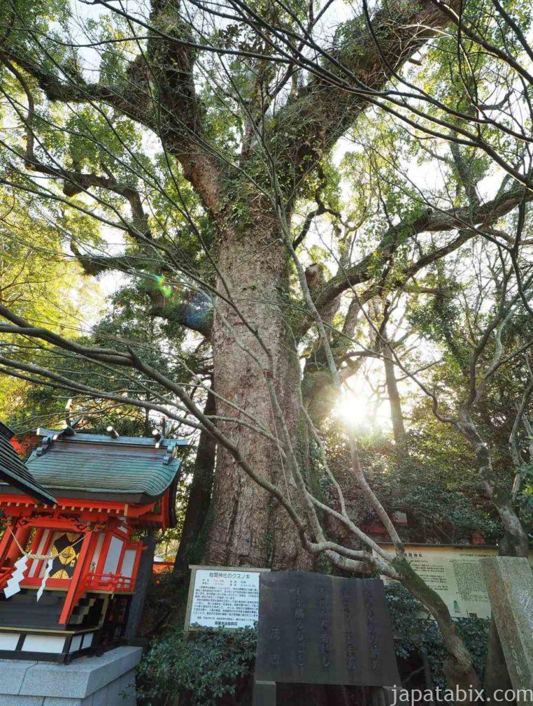 枚聞神社の御神木